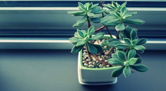 Sie schmeicheln den Augen, sorgen für Behaglichkeit und regulieren auch das Raumklima. Indem sie Sauerstoff produzieren und sogar Gifte abbauen. Lies' doch mal, welche Pflanzen dir im Winter besonders gut tun. Instinktiv umgeben gerade wir Frauen uns gern mit vielen grünen Pflanzen. Ob nun im Büro oder zu Hause in den eigenen vier Wänden. Gut …