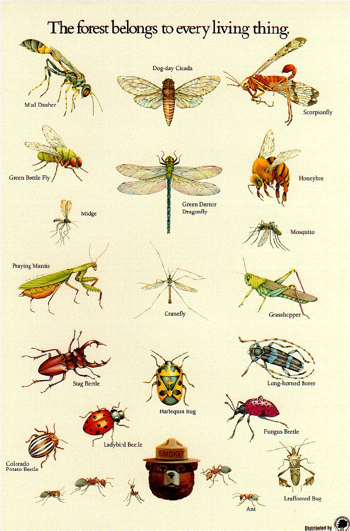 Insect identification poster from the U.S. Forestry Service. Insect activity, Apologia Flying Creatures, #homeschool