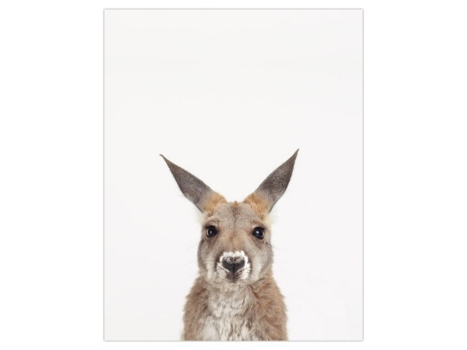 Ok, I'm I sucker for this! Baby Kangaroo from Animal Print Shop