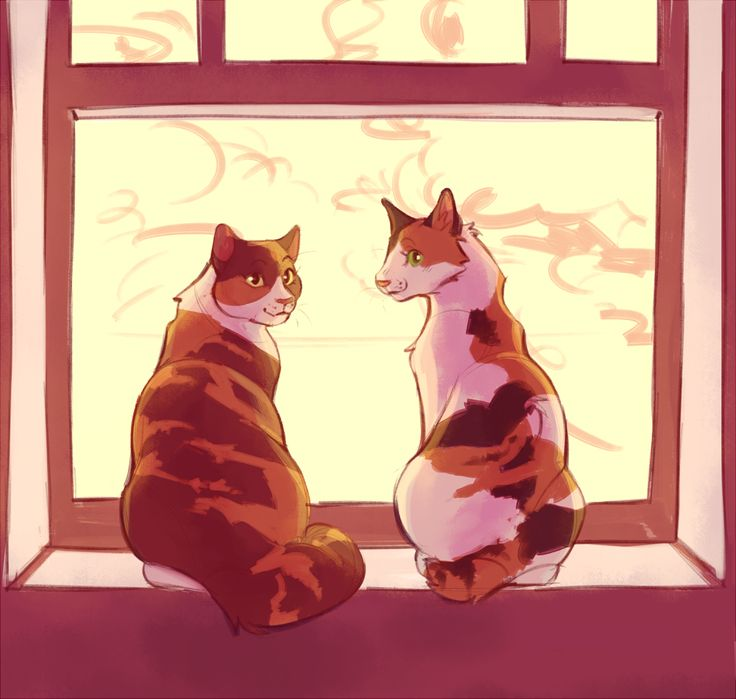 Warriors Dawn Of The Clans Book 1: 17 Best Images About Warrior Cats On Pinterest