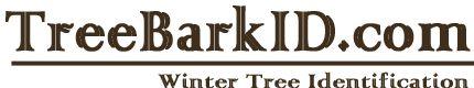 General Bark ID Key - Tree Bark ID