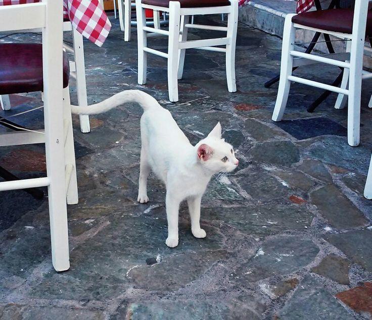 White cat   Biljana Vranješ