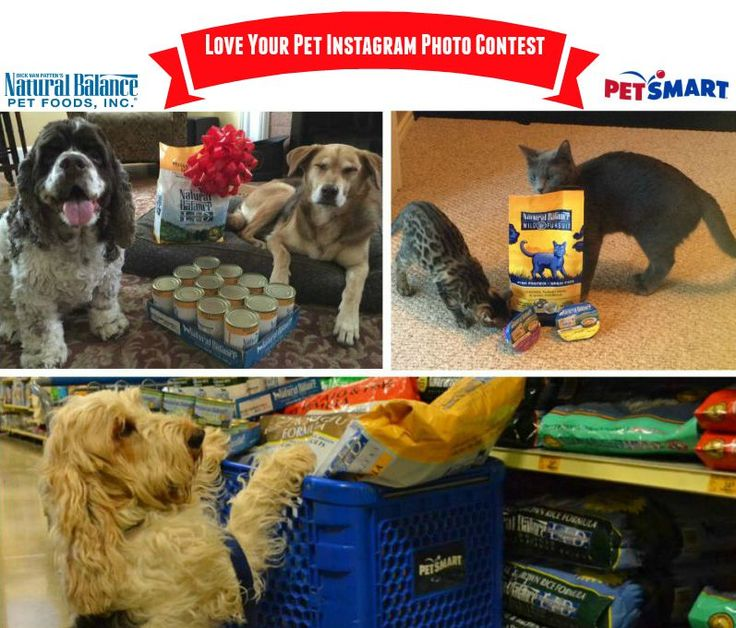"""Do you have a pet that you love oh so very much? Then show BlogPaws how much you love your pet in the """"Love Your Pet Instagram Photo Contest"""" that starts now and ends on September 16, 2015, at 11:59 pm EST. Here's the scoop, how to enter, and what the prizes entail along with rules:"""