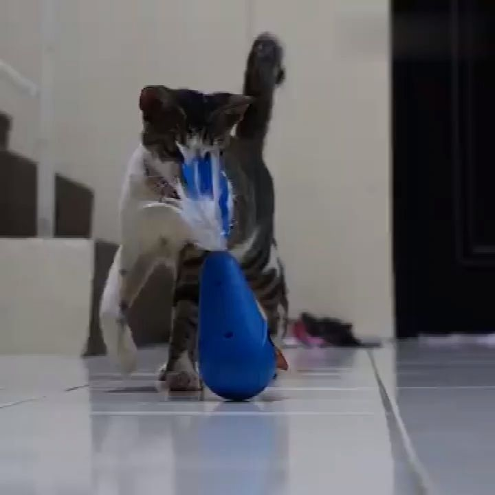 All Cat Supplies On Sale! In 2020