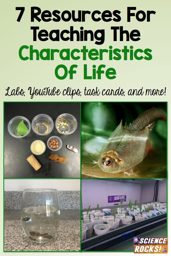7 resources for teaching the characteristics of living things. Lab ideas, youtube clips, task cards, and more! From Science Rocks