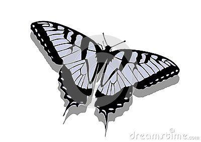 Vector Illustration of gray butterfly.