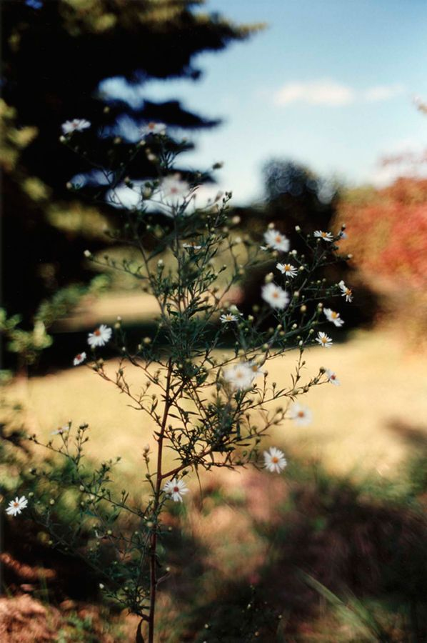 Santucci & Co. — Terri Weifenbach — Hunter green