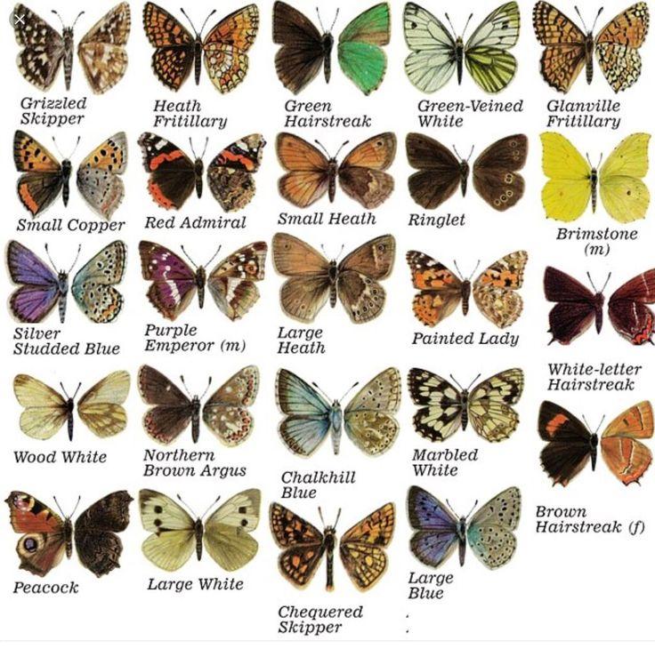 Картинки про бабочек с названиями, открытки днем
