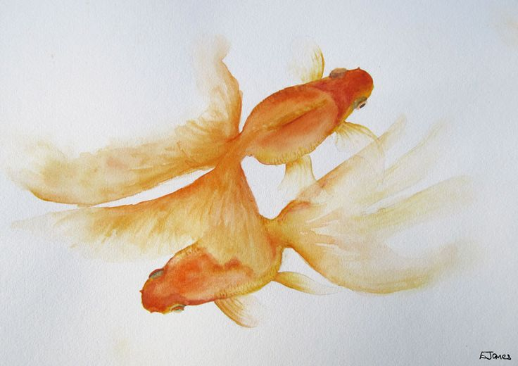 'Goldfish' in watercolour 42x30cm by Elizabeth James. Fine art prints available via http://www.facebook.com/media/set/?set=a.675692062503221.1073741835.318539891551775&type=3  #goldfish #fish #watercolour #fineart #elizabethjames #lotusstar #adelaide