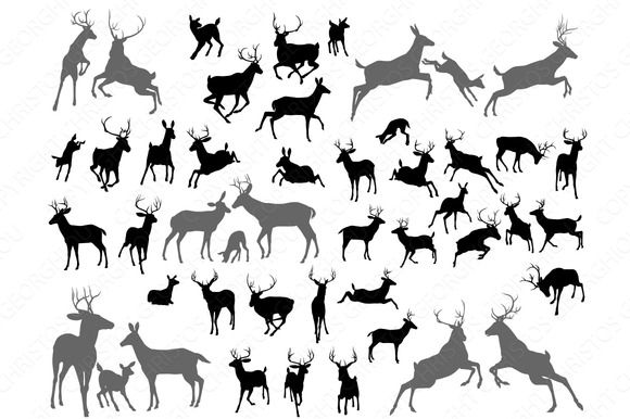 Check out Deer stag fawn and doe silhouettes by GeoImages on Creative Market