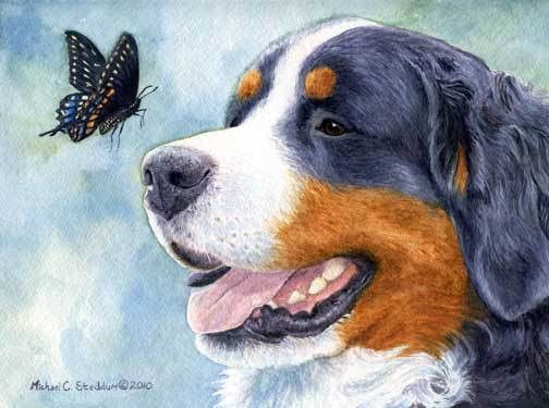 Bernese Encounter Limited Edition Print Work Of Art Dogs