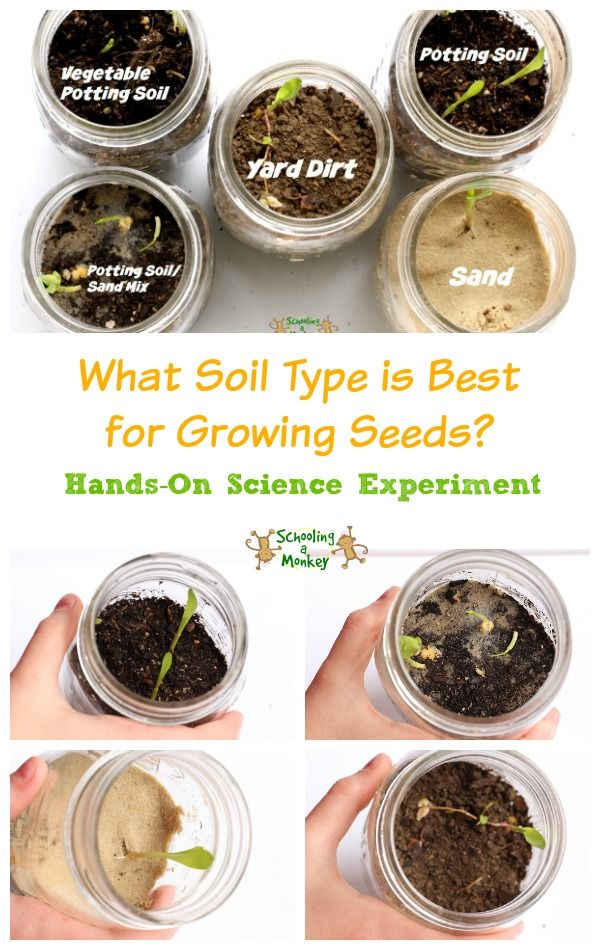 716 best images about science for kids on pinterest for Soil and plant lab