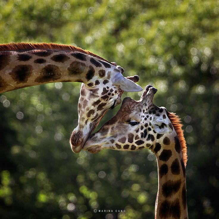 Unreal Wildlife Pictures Of Animals In The Wild