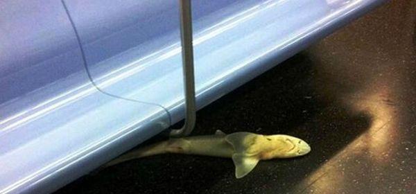 Tiburón aparece en el metro de Nueva York