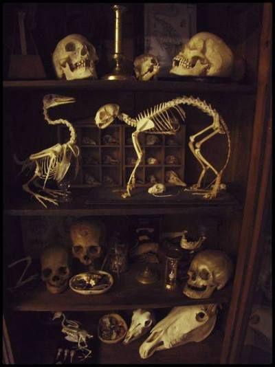 Best 25 Skull Decor Ideas On Pinterest Gothic Room
