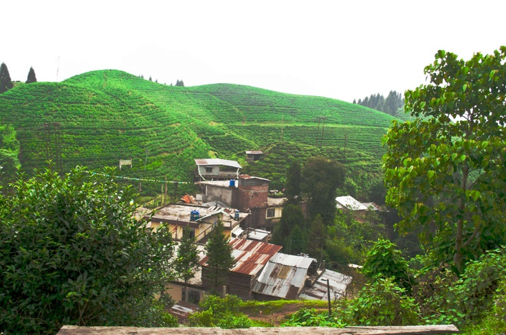 Darjeeling's green beauty - Perched amidst its greenery, tea gardens in Darjeeling's landscapes depicts the splendor of nature at its best.