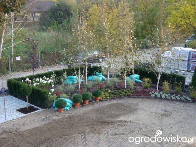 Ogród z lustrem - strona 52 - Forum ogrodnicze - Ogrodowisko