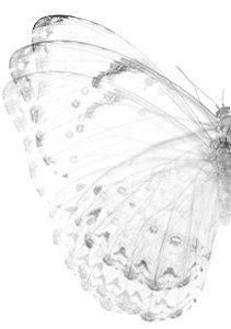 Essence of Butterfly
