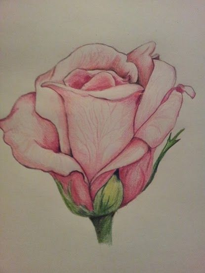 rose drawing tumblr - Buscar con Google