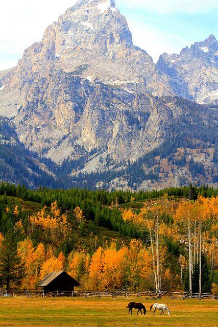 Fall colors at Grand Teton National Park, Wyoming