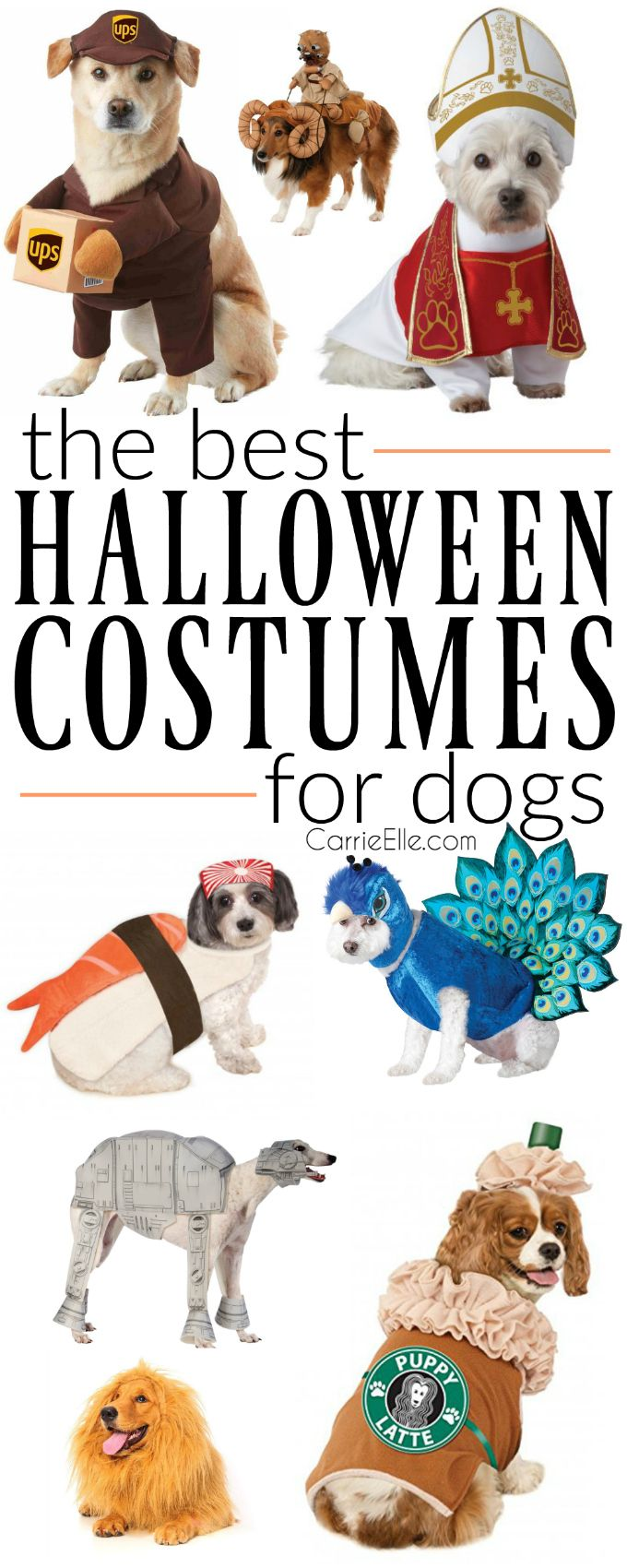 Best 25+ Cat dog costume ideas on Pinterest | Puppy clothes, Buy ...