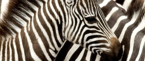 Klassisk Jambo-safari i Kenya