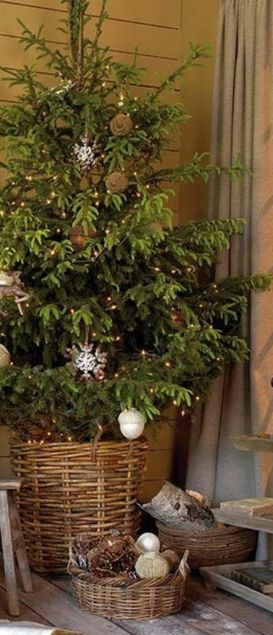 Outdoor decor...Christmas Decorating Ideas...love Norfolk Pine trees decorated at Christmas!!