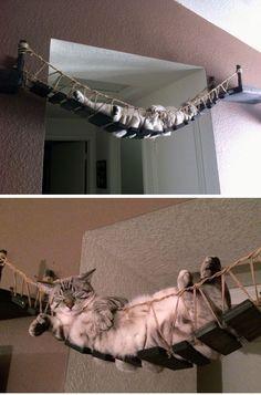 ♥ Cool Pet Furniture ♥ Awesome Cat Furniture Design Ideas For Crazy Cat People. Indiana Jones Cat Bridge