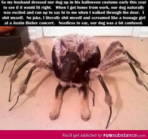 Spider Dog Costume--Terrifying! Hahaha! I can imagine how this looks when the dog starts walking or running around.