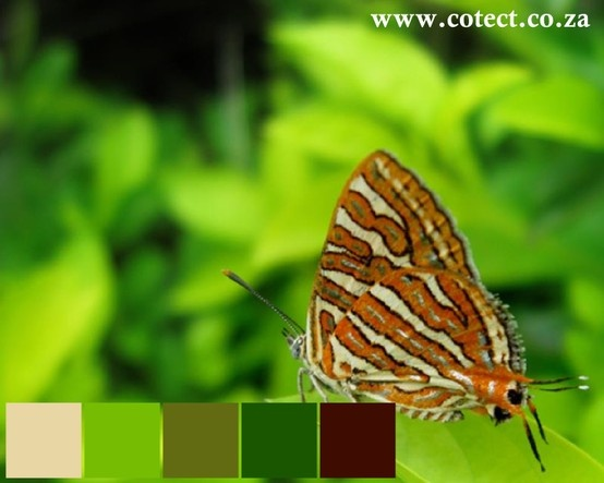 Draw inspiration from nature when deciding what #Colour to use.