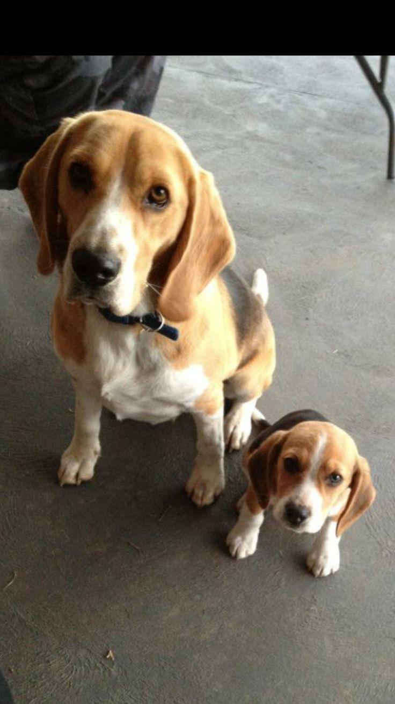 Beagle family :-)