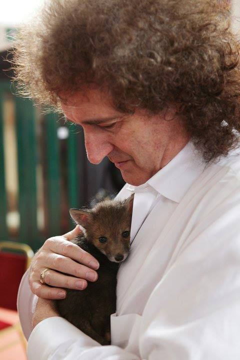 Brian May with a baby fox