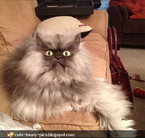 141 best images about funny angry animals on pinterest