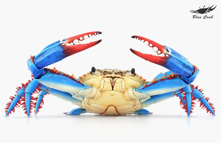 how to cook fresh blue crab
