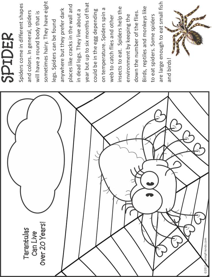 Spider Fact And Coloring Page