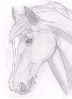 paint horse head | Horse head sketch by ~puddlecat1 on deviantART