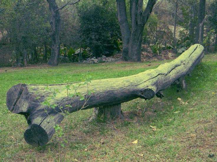 Tronco de árbol.