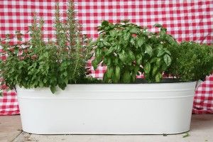 1 lrg container potted herb garden. Need packing peanuts & miracle grow potting soil(has fertilizer in it) be sure has holes for good drainage. Fill container 1/3 full, then fill with soil, then plant seedlings. Water daily. video included.