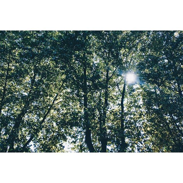 Reposting @reinadelospatosos: Quiero un día tranquilito bien. Sin dramitas. Sin personas intensitas. Solo trabajo bien y luego solectio, vale? Madre natura escúchame, mamonaca. ♥️ . . . . . . . . #nature #sky #sun #summer #beautiful #pretty #sunset #sunrise #blue #flowers #night #tree #twilight  #beauty #light  #photooftheday #love #green #skylovers #dusk #weather #day #green #iphonesia #mothernature #vsco #vscocam #travel #traveling #TFLers