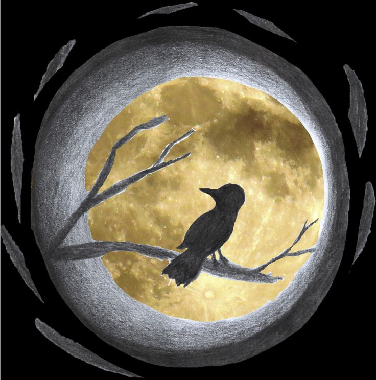Bird front of the Moon