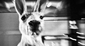 In dieser freien Enzyklopädie erfahrt ihr alles über Die Känguru-Chroniken, Das Känguru-Manifest und Die Känguru Offenbarung sowie den Känguru-Geschichten von Marc-Uwe Kling. Das Wiki ist noch in der Startphase und es werden nur nach-und-nach Informationen hier erstellt, also habt bitte etwas Geduld. Wenn ihr auch Fans des Kängurus seid, helft doch bitte mit, dieses Wiki zu einer umfangreichen Quelle zu machen. Marc-Uwe Kling Kleinkünstler und Erfinder des Kängurus Das Känguru Kommunist und…