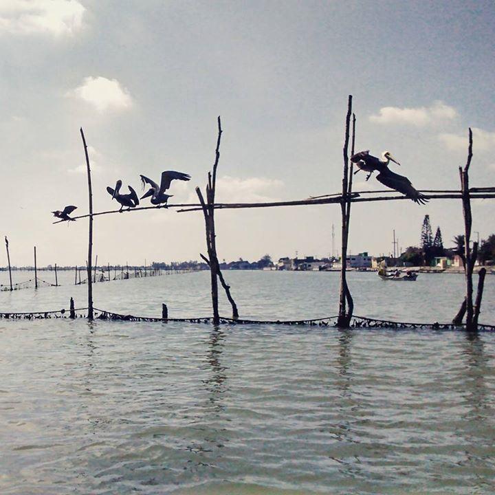Tuxpan: Playa, mariscos y paisajes únicos cerca del DF
