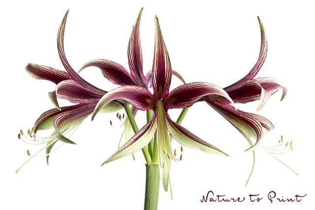 93 Besten Orchideen Und Exotische Blüten Bilder Auf