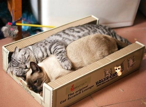 Two cats cuddling together in a box.