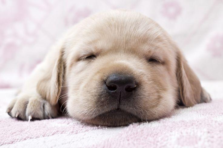 Budzimy się!! Nowy tydzień czas zacząć :) http://www.fototapeta24.pl/ #fototapeta #fototapeta24pl #goodmorning #monday #mondaymorning #pies #dog #sweet #sweetdreams