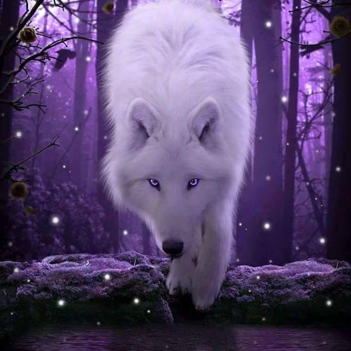 GORGEOUS white wolf and purple background and purples on wolf and in eyes too. Love this!