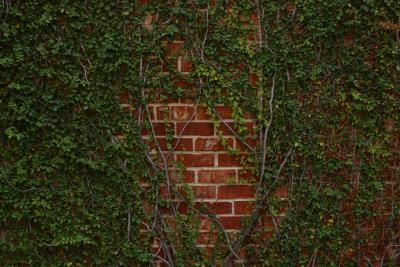 Plants Used To Insulate Homes Gardens Bricks And Insulation