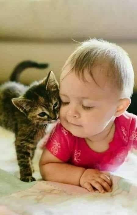 3e962c1f88e5b8 Pin by Joan Cemali on Cats and kittens | Cute animals, Animals for kids,  Cute cats