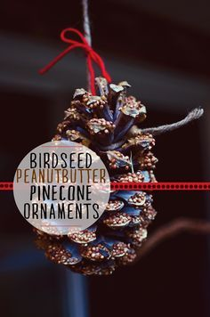 Bird Seed Pinecone Ornaments – a really fun nature activity with the kids