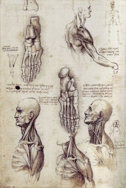 Leonardo da Vinci  was one of the most famous and in fact most known painter of the world. He is the creator of one the most famous portr...